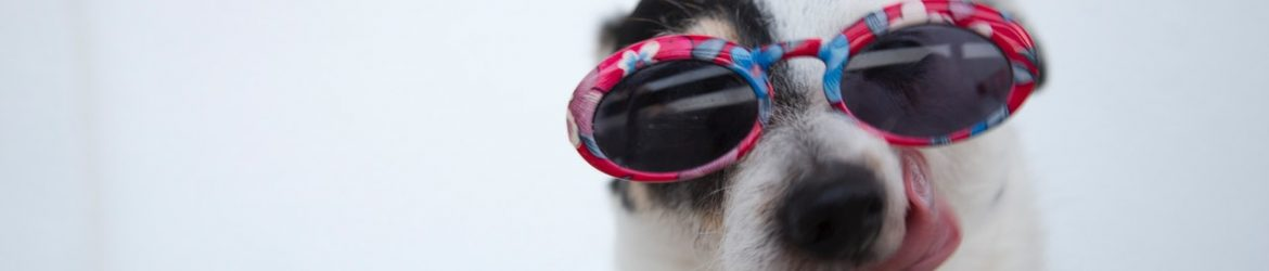 cropped-close-up-photo-of-dog-wearing-sunglasses-1629781.jpg